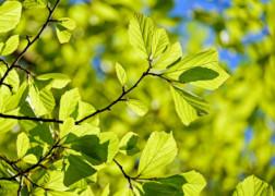 Poradnik Nowe ekologiczne klimatyzatory przenośne TORELL
